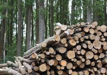Biomasse - Foto di recyclind da Pixabay