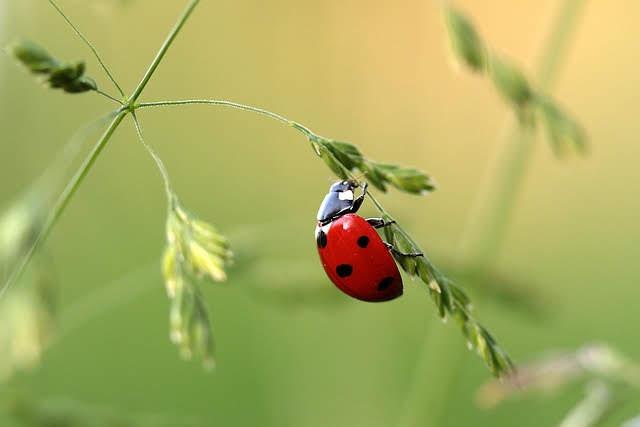 Sviluppo sostenibile - Foto di Myriam Zilles da Pixabay