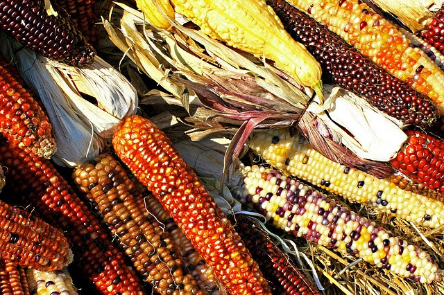 PSR Emilia-Romagna: bandi tutela biodiversità- photo credit: pixabay CLM-vb